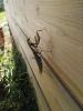 Spinnenschreck_1
